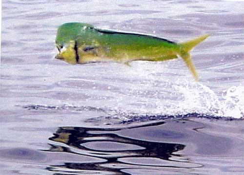 The Charterboat Gon Fishin V Florida Keys charter fishing